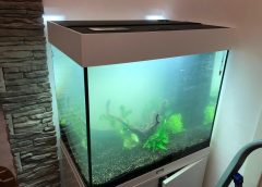 Juwel Lido 120: come allestire acquario in casa ed errori da non fare