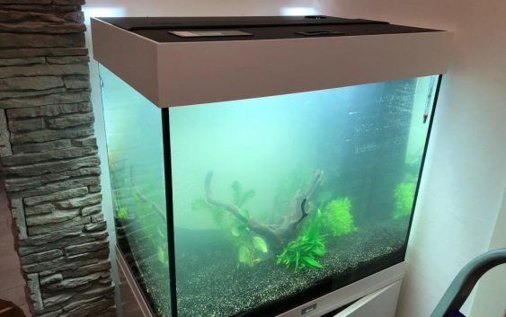 Acqua acquario torbida normale cosa devo fare non limpida cristallina - Acquario x casa ...