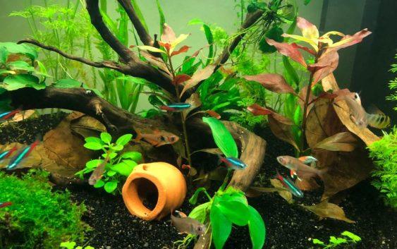 Cose da fare acquario dolce tropicale cambio acqua filtri for Arredamento acquario dolce